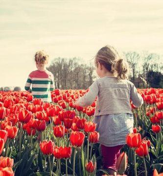 propiedades de las flores